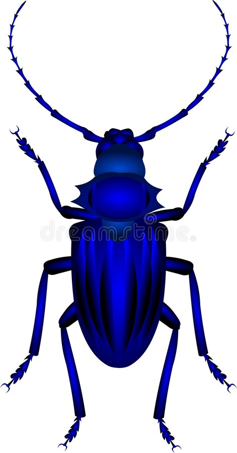 Beetle. Tropical beetle stock illustration