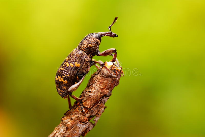 Beetle stock images