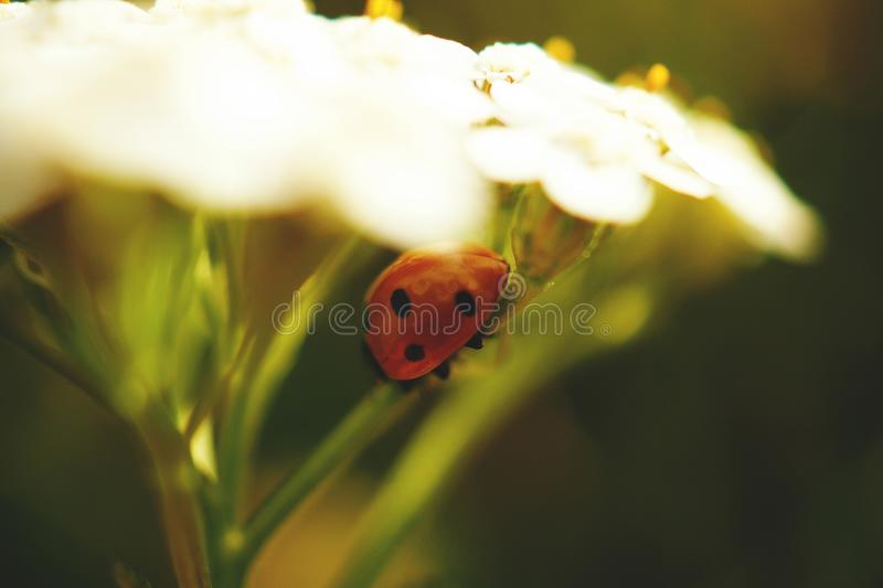 Beetle, Blur, Bright stock photography