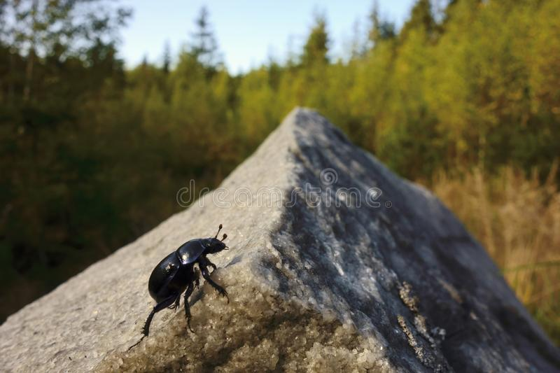Beetle climbing to the top stock photo