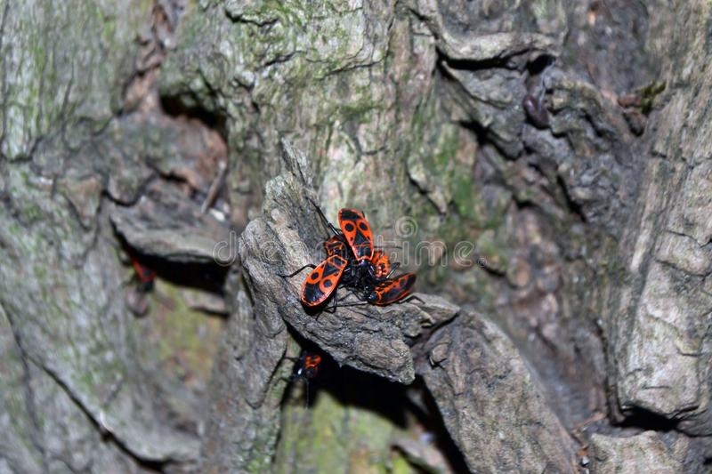 Beetle on the tree. insects. stock photo
