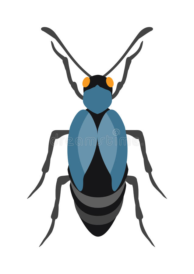 Beetle flat insect bug in cartoon style vector stock illustration