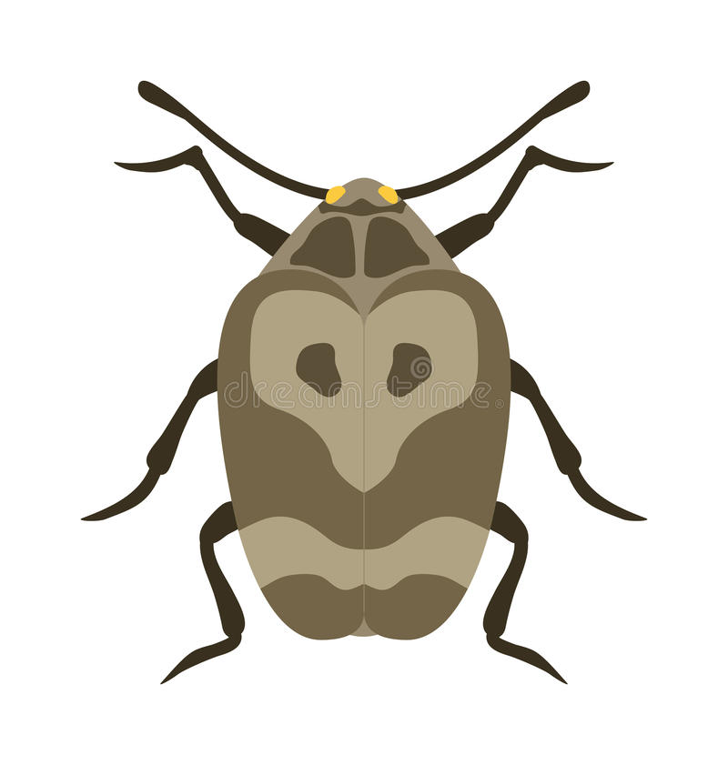 Beetle flat insect bug in cartoon style vector vector illustration