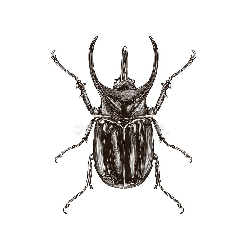 insect drawing png stock photo illustration of hour 112702850
