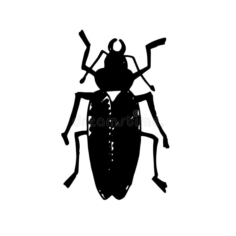 Free Beetle Insect. Nature Water Beetle And Zoology Water Beetle. Wildlife Insect Water Black Beetle Ecology Detail. Royalty Free Stock Image - 89061056