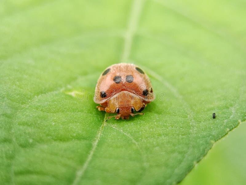 Beetle stock image. Image of java, lens, camera, using - 108130909