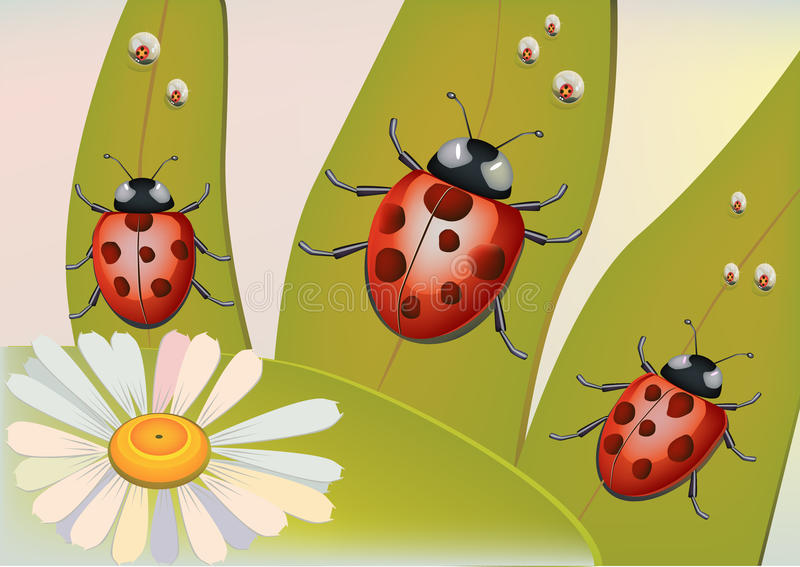 Download Beetles  ,dew . stock vector. Image of vibrant, painting - 24505288