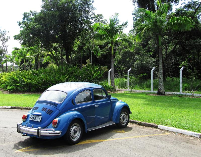 Beetle in Brazil royalty free stock images
