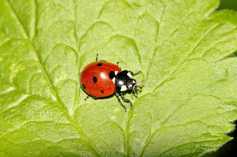 Beetles, spiders, insects royalty free stock photo