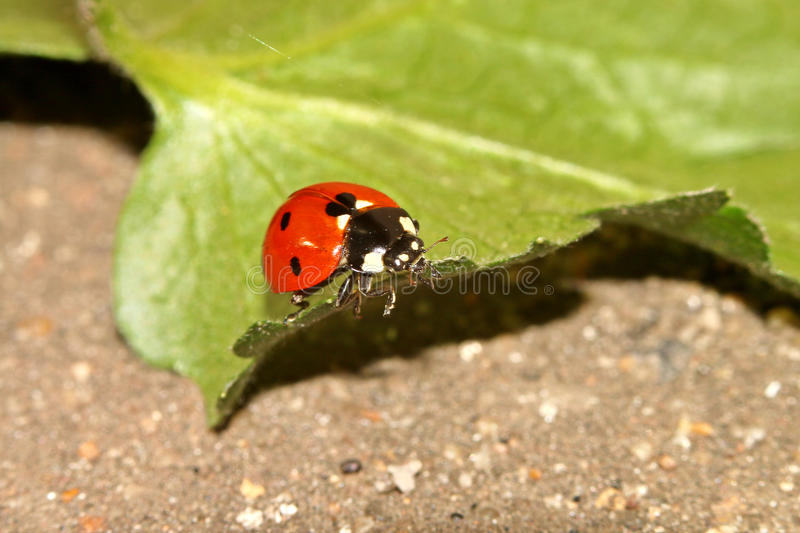 Beetles, spiders, insects royalty free stock photography