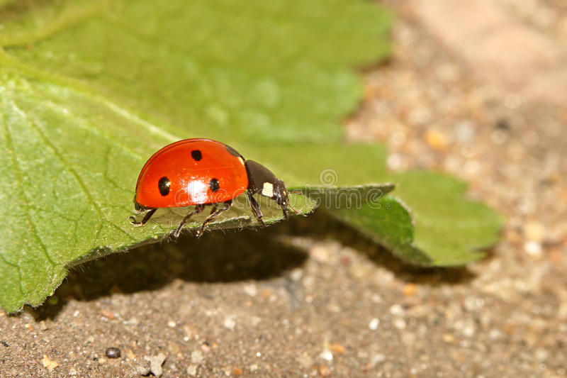 Beetles, spiders, insects stock images