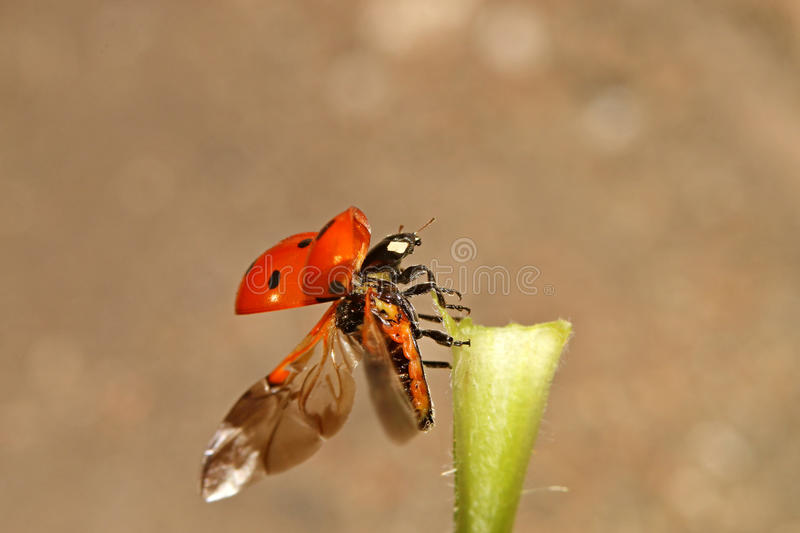 Beetles, spiders, insects royalty free stock image