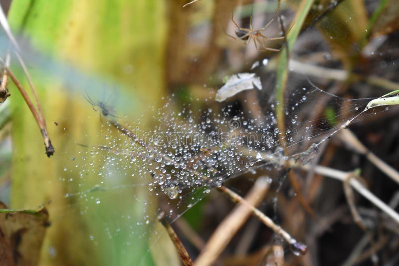 Beetles spiders spider web water droplets macro landscape stock photos