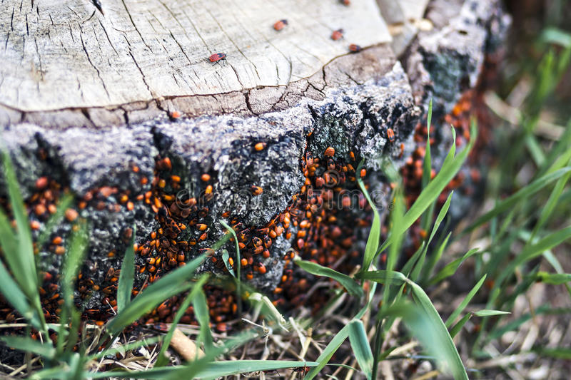 Beetles on a tree stump stock image