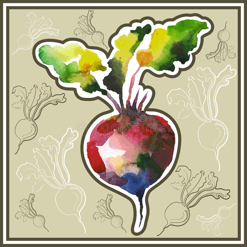 Beetroot. Ð¡ard (postcard) with beetroot in watercolor style vector illustration