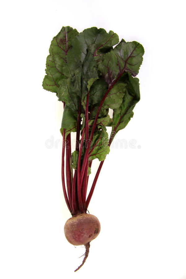 Beetroot. One fresh beetroot on a white background stock images