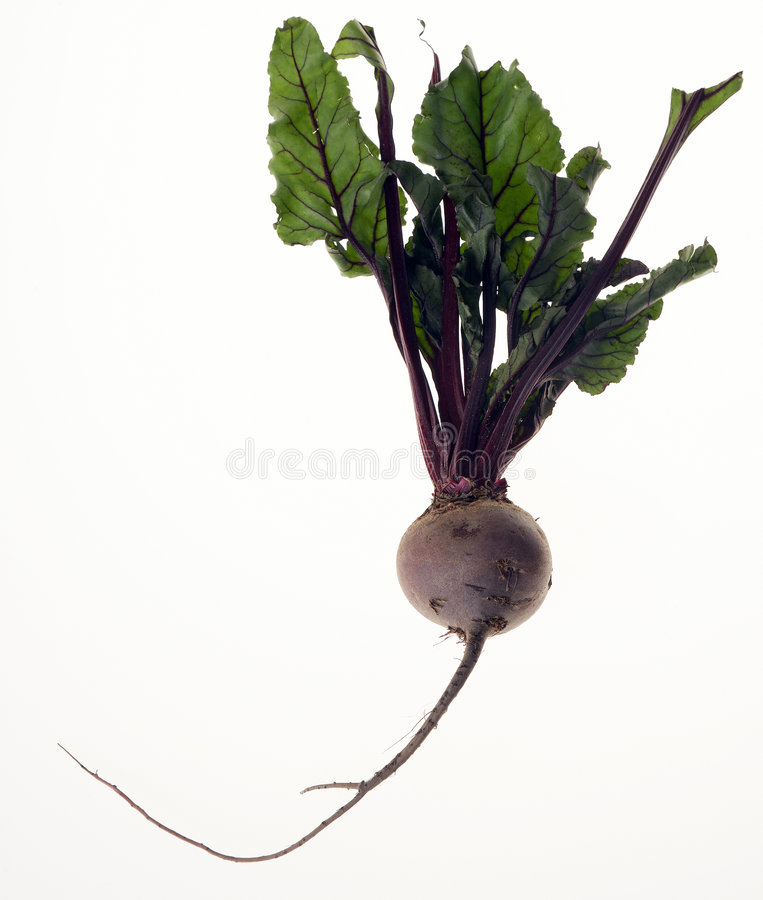 Beetroot stock image