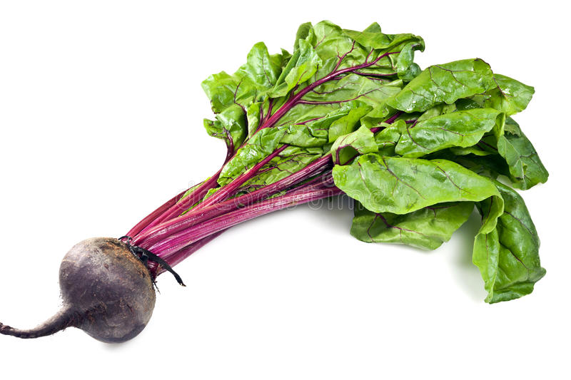 Beetroot. Is any of the cultivated varieties of beet (Beta vulgaris) grown for their edible taproots, especially B. vulgaris L. subsp. conditiva. It consists of stock photos