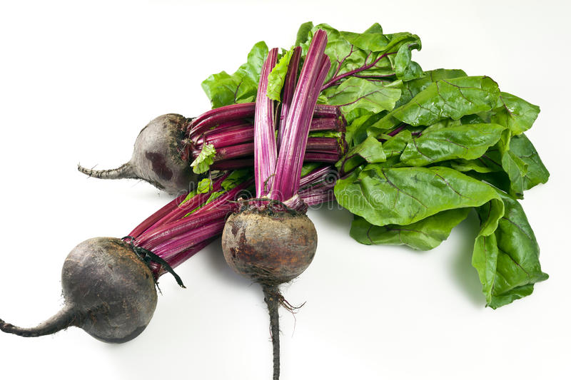Beetroot. Is any of the cultivated varieties of beet (Beta vulgaris) grown for their edible taproots, especially B. vulgaris L. subsp. conditiva. It consists of stock photography