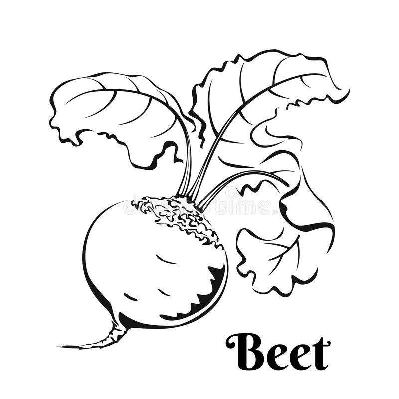 Beetroot black and white image. Vegetable Icon. Isolated on white background. Vector  illustration of food in simple style vector illustration