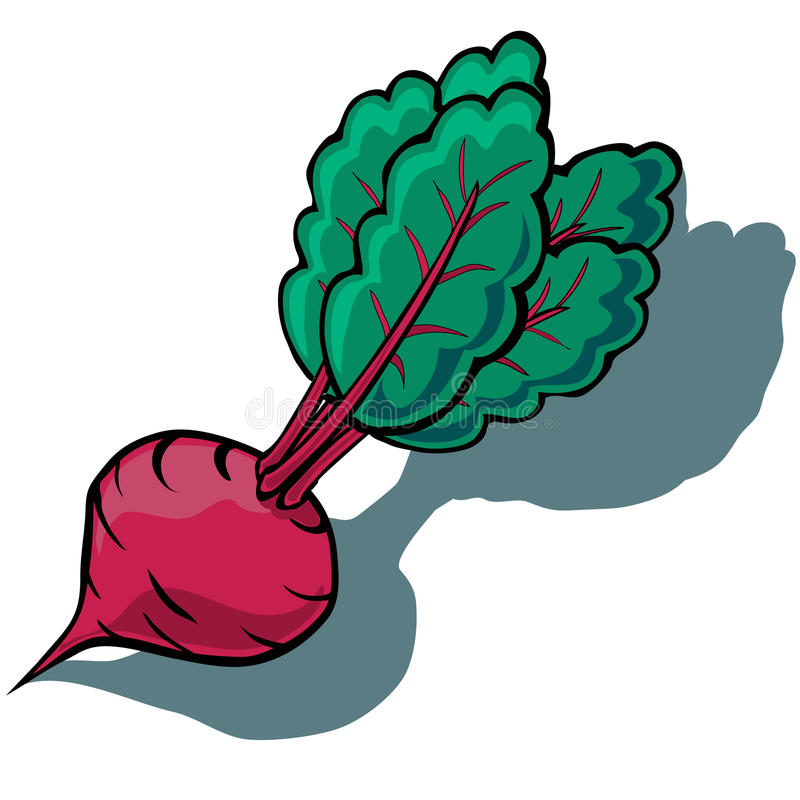 Beetroot. Cute vector cartoon Beetroot isolated with shadow stock illustration