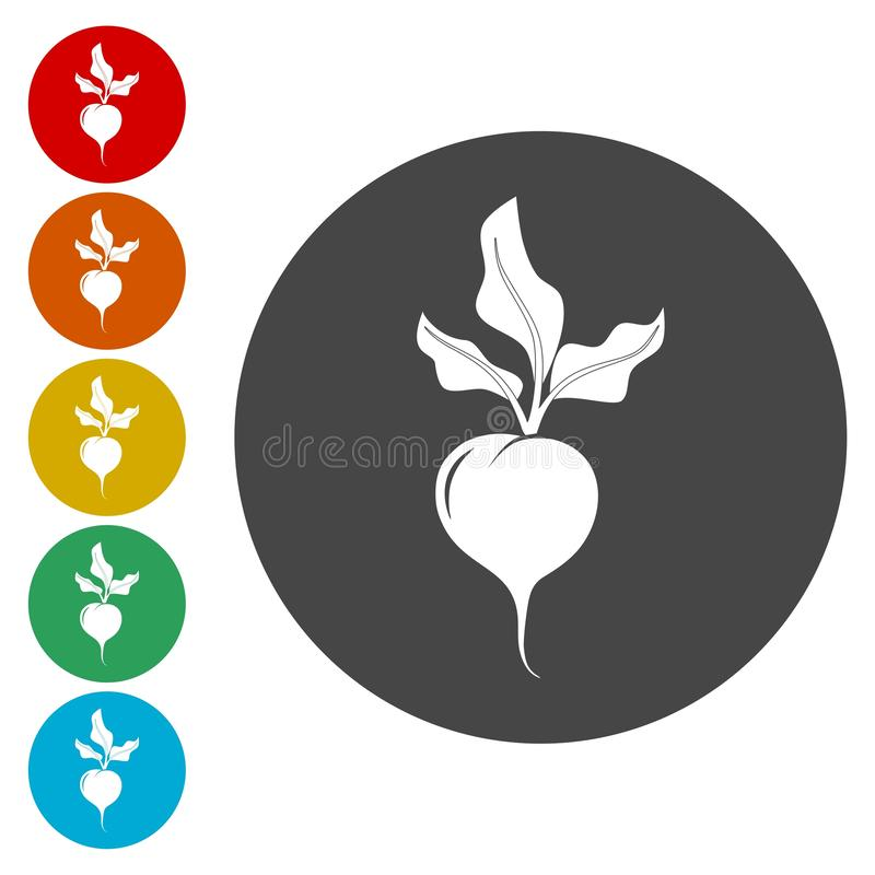 Beetroot flat design, linear and color icons set. Vector icon royalty free illustration