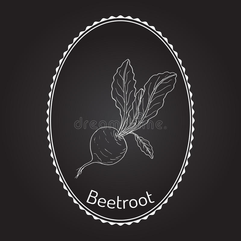 Beetroot with green leaves. Vector illustration vector illustration