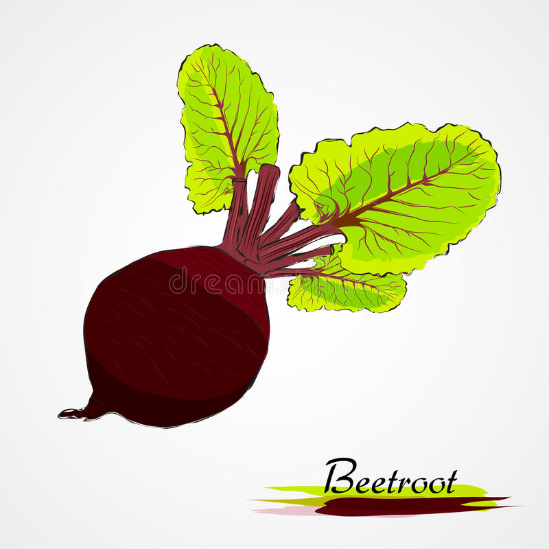 Beetroot. Hand drawn vector ripe black beetroot vegetable with leaves on the light background stock illustration