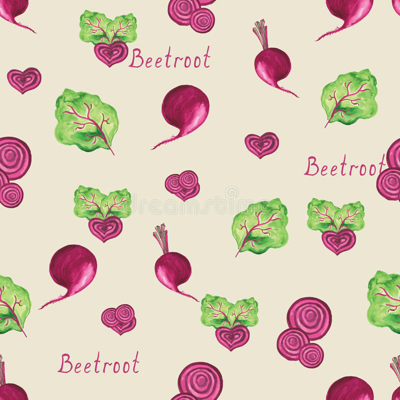 Beetroot. Hand drawn watercolor background, vector royalty free illustration