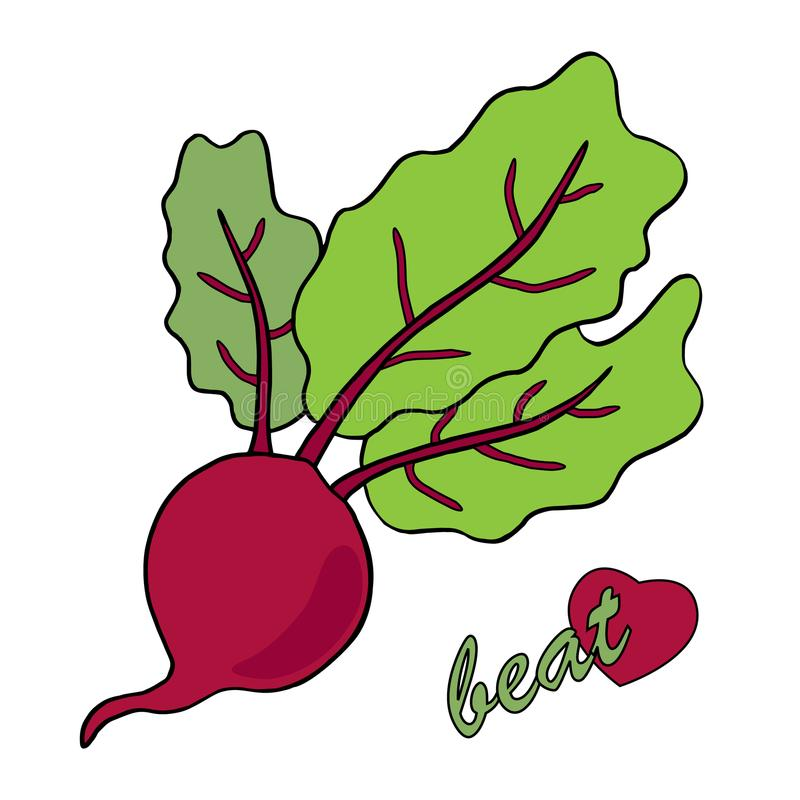 Beetroot illustration vector. White background. Beetroot. Hand drawn illustration vector of a red beet with writing and heart as a symol of health. White royalty free illustration