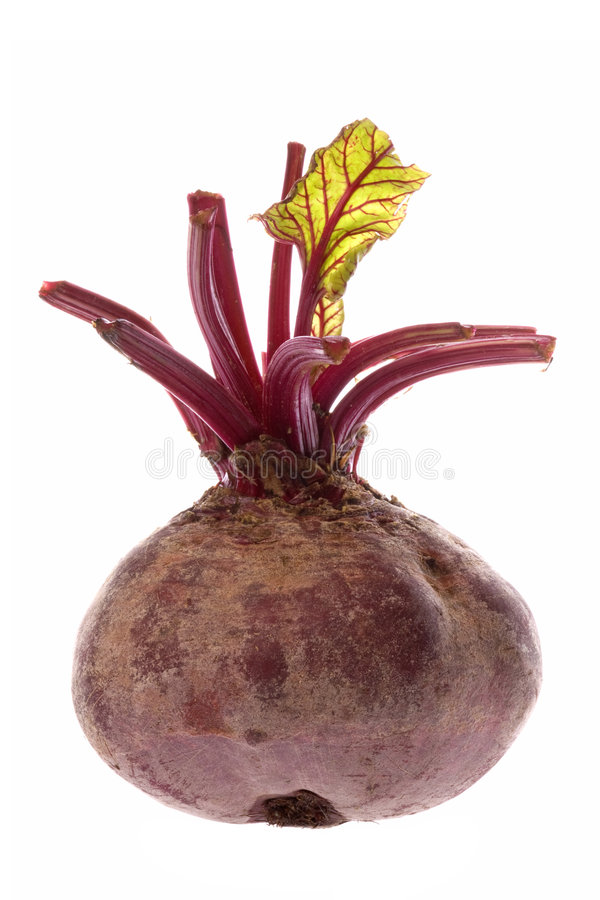 Beetroot Isolated. Isolated image of a Beetroot stock photography
