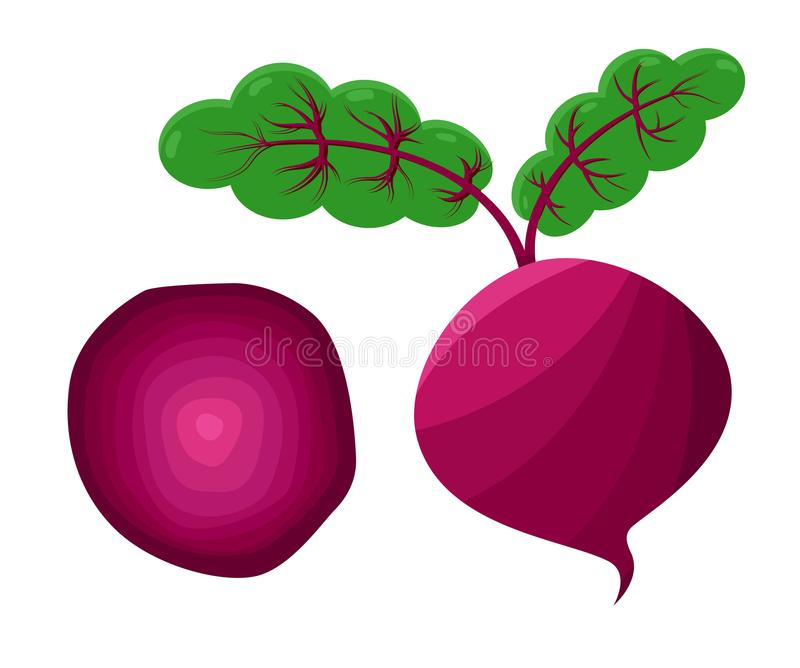 Beetroot and Leaves Collection Vector Illustration. Beetroot and leaves collection, vegetable of rounded shape with green leaf on top, useful plant good for stock illustration
