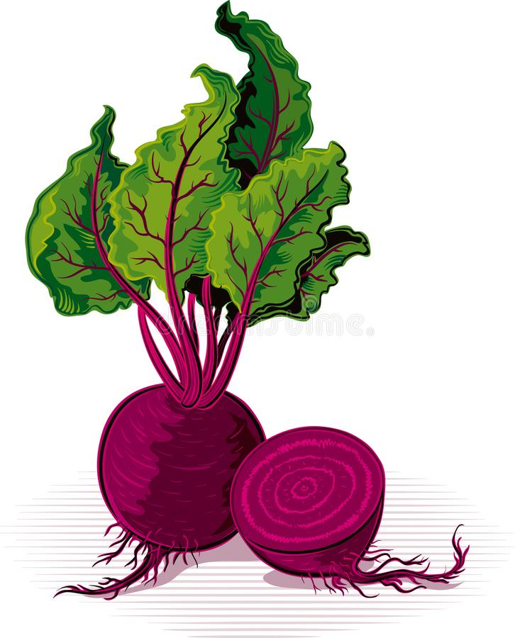 Beetroot, resting on a plane royalty free illustration