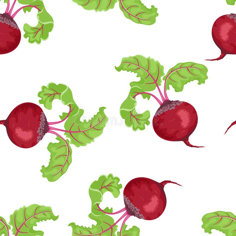 Beetroot seamless pattern on white background. Vector illustration of red root vegetable. With green leaves in cartoon simple flat style stock illustration