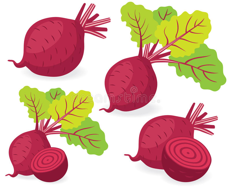 Beetroot vector illustrations stock illustration