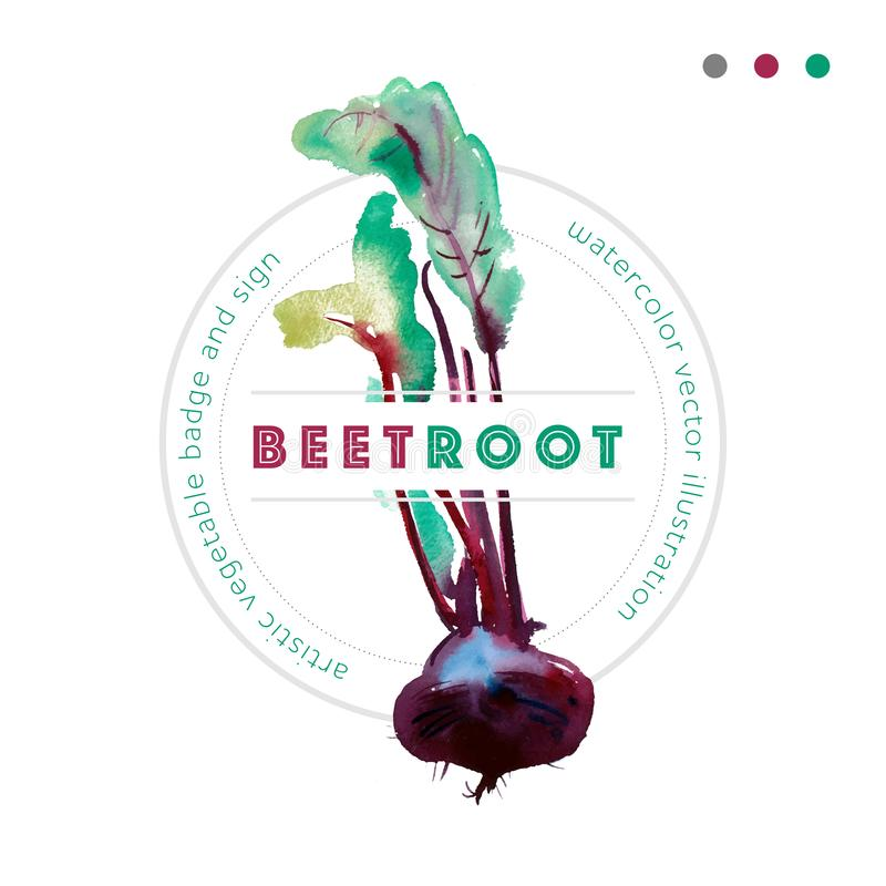 Watercolor vector beetroot badge, banner with beetroot, vector Beet with leaves, purple root. Beetroot vector watercolor sign with leaves, banner with ripe vector illustration