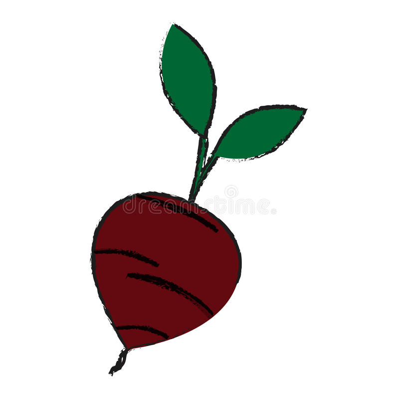 beetroot vegetable icon stock illustration