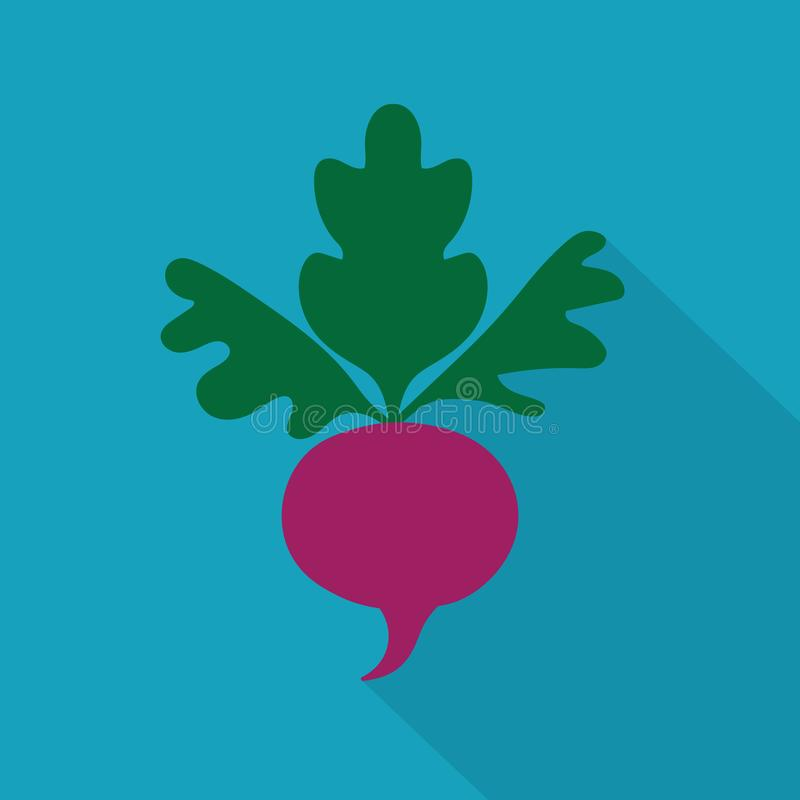Beetroot vegetable icon vector illustration