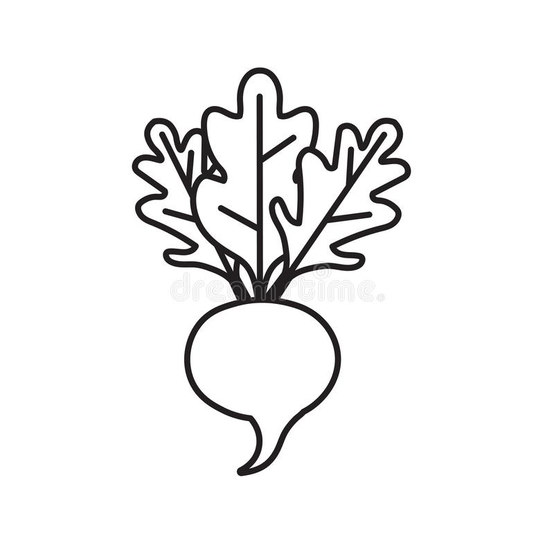 Beetroot vegetable icon. Vector illustration vector illustration