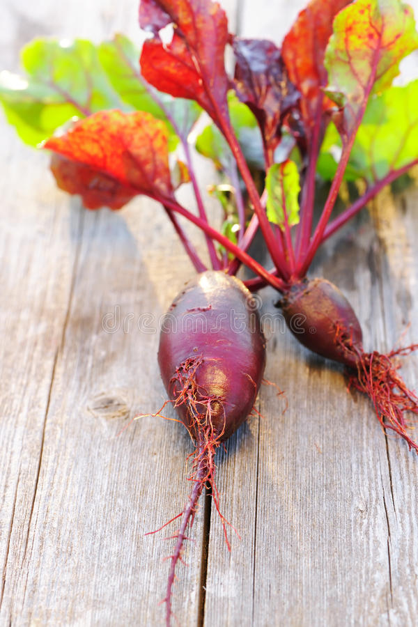 Download Beetroot on wooden table stock image. Image of ripe, nature - 26212361