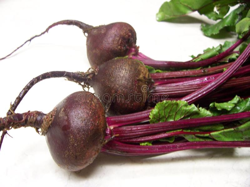 Beets. Isolated beets with roots on white royalty free stock images