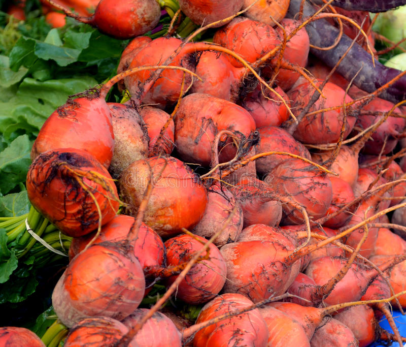 Download Beets stock image. Image of crisp, root, produce, farmers - 26627929