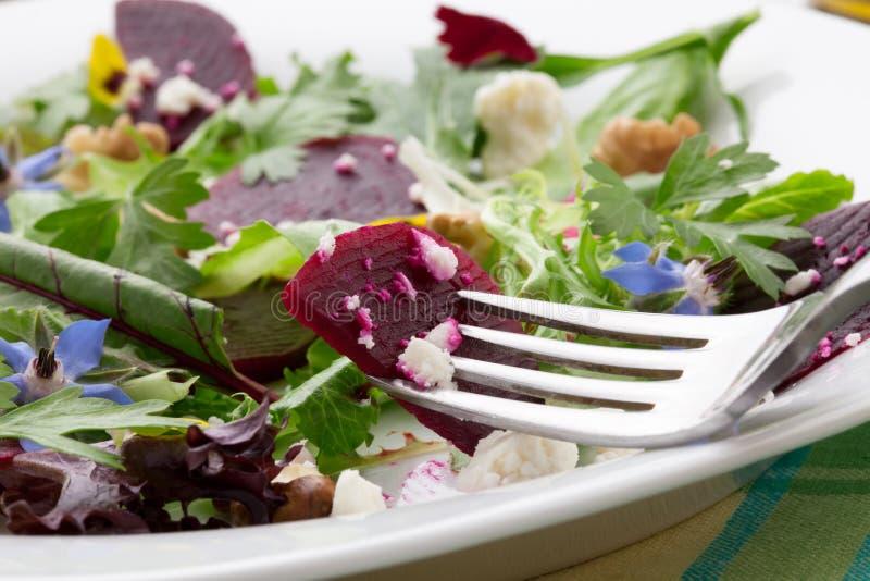 Beets And Baby Greens Salad royalty free stock photo
