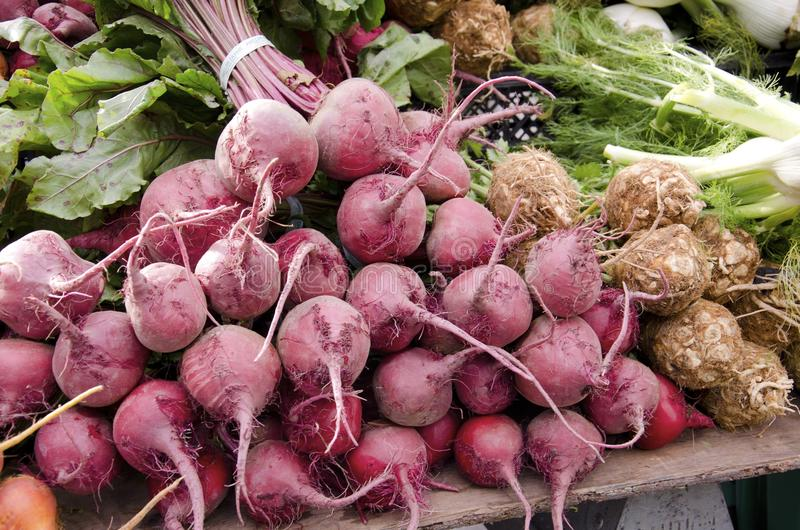 Beets. Bunches of purple beets for sale in the outdoor farm market royalty free stock photo