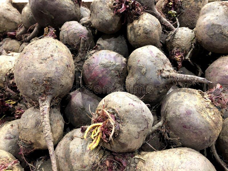 beets Für Verkauf im Markt Ein lebendes Fragment von einem Obst- und Gemüse Speicher lizenzfreie stockfotos