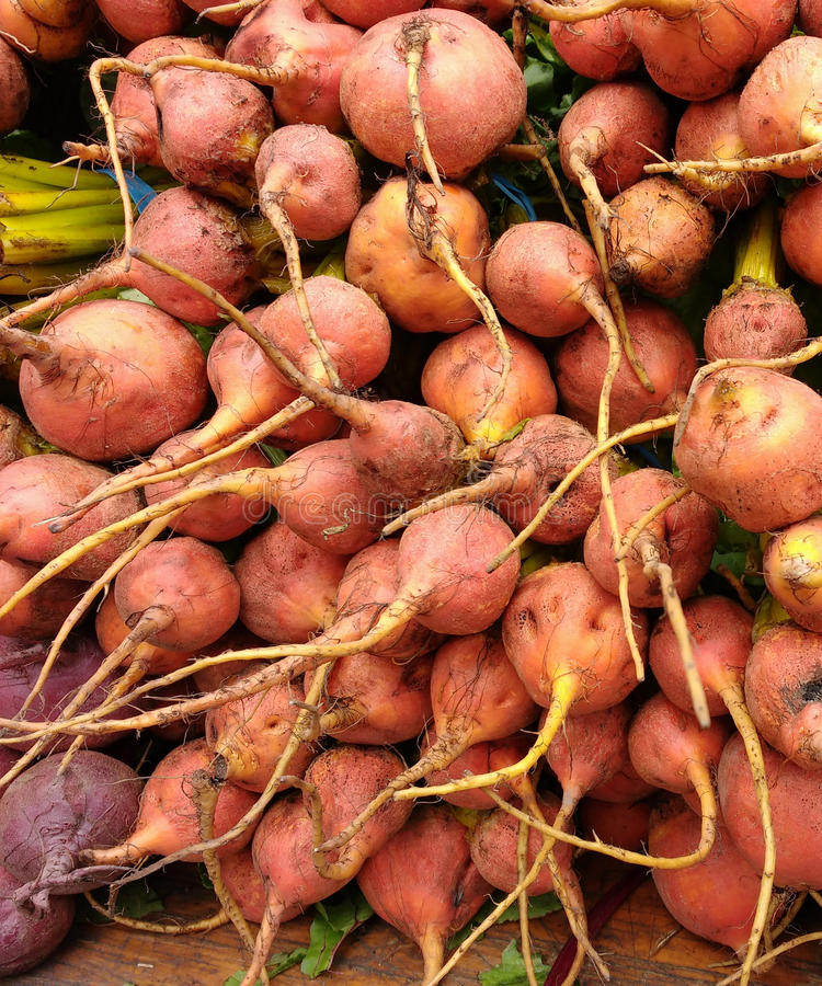 Beets. A table full of golden beets for sale at the Union Square Greenmarket, a popular, year-round farmer`s market in New York City, USA. This photo was taken royalty free stock photography