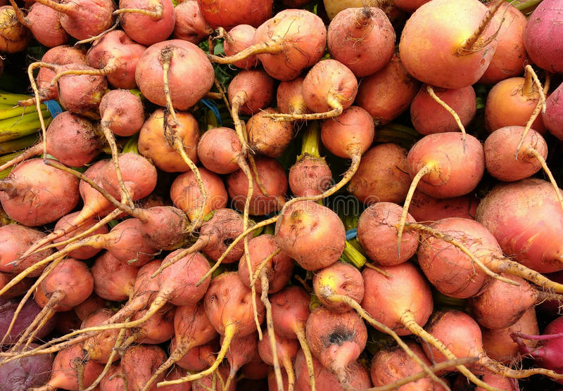 Beets. A table full of golden beets for sale at the Union Square Greenmarket, a popular, year-round farmer`s market in New York City, USA. This photo was taken royalty free stock photo