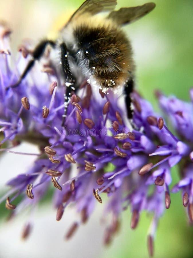 Beework zdjęcie royalty free