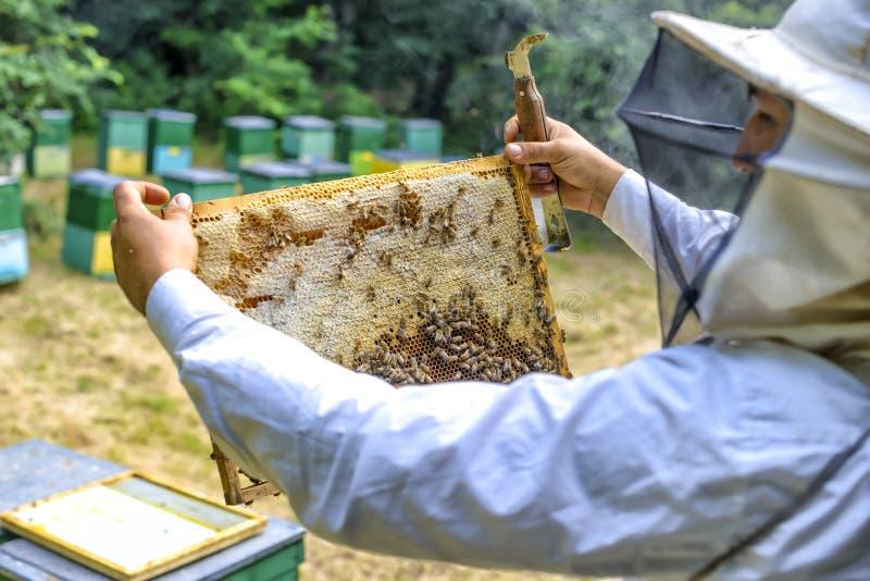 Beeyard et abeilles de contrôle d'apiculteur extérieurs photo stock