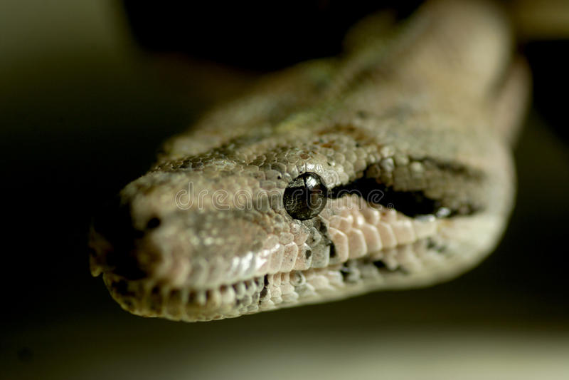 Befürchten Sie die Augen einer Schlange lizenzfreie stockbilder